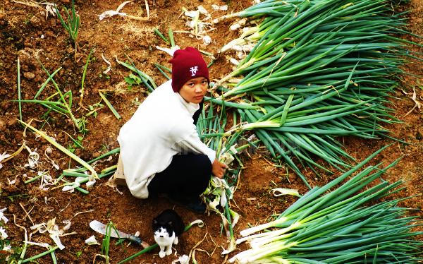 Kundasang Farmer