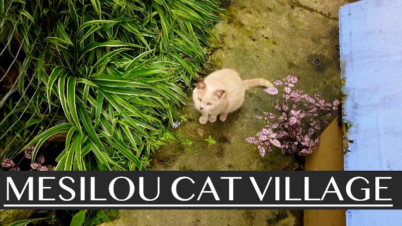 Mesilou Cat Village, Kundasang